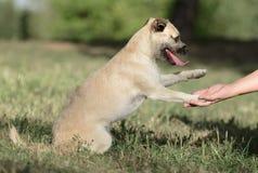 母杂种小狗 免版税库存照片