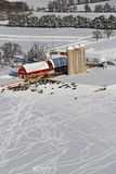 母牛乱写威斯康辛冬天农厂天线 库存图片
