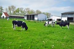 母牛农厂农业 免版税库存图片