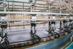 母牛农厂生产 库存图片