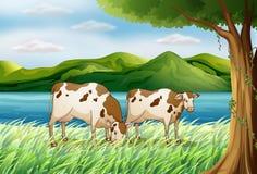 母牛和一个美好的风景 免版税库存照片