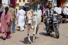 母牛和人们主要市场路的,普斯赫卡尔,印度 库存图片