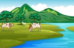 母牛和山羊在河岸 图库摄影