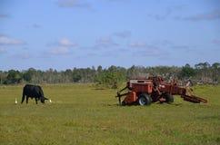 母牛和打包机在领域 库存照片