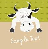 母牛和文本框 库存照片