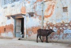 母牛和狗 免版税库存照片