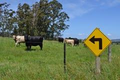 母牛和路标 库存图片