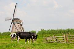 母牛和风车 免版税图库摄影