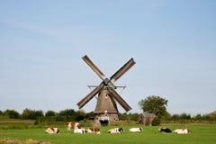 母牛和风车 库存图片