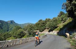 母牛和骑自行车者在可西嘉岛 免版税库存照片