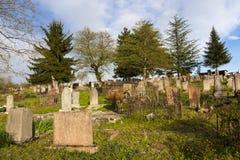 母牛在公墓,阿布哈兹 免版税库存图片