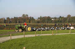 母牛在南瓜补丁农场的火车乘驾 免版税图库摄影