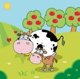 母牛在果树园附近的一个牧场地 库存例证
