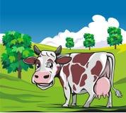 母牛在草甸绿色背景中 免版税库存图片