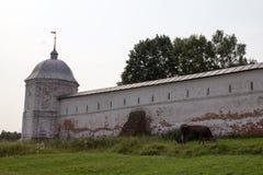 母牛在Goritsky修道院的古老墙壁旁边吃草 Pereslavl-Zalessky 俄国 免版税库存图片