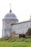 母牛在Goritsky修道院的古老墙壁旁边吃草 Pereslavl-Zalessky 俄国 免版税库存照片