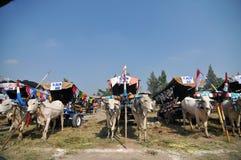 母牛村庄在Boyolali,印度尼西亚 库存图片