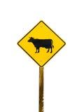 母牛横穿 免版税库存图片
