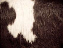母牛毛皮14 免版税库存照片