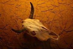 母牛沙漠头骨 库存照片