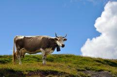 母牛牛奶店瑞士 免版税库存照片