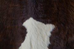 母牛皮革 免版税库存图片