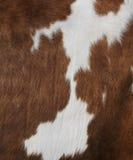 母牛纹理 图库摄影