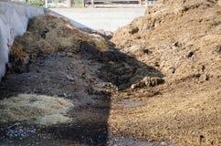 母牛肥料在农场 免版税库存图片