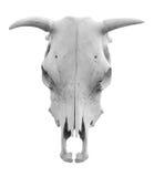 母牛西部查出的头骨的样式 库存图片