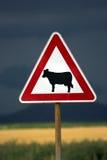 母牛警告 图库摄影