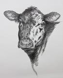 母牛铅笔图 免版税库存图片