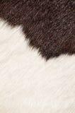 母牛长毛的纹理 库存图片