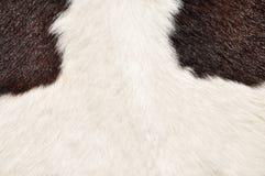 母牛长毛的纹理 免版税图库摄影