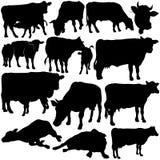 母牛集合剪影 免版税库存照片