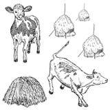 母牛集合 免版税库存图片