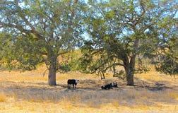 母牛领域 免版税库存图片