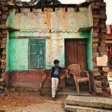 母牛,被破坏的房子,有黑暗的皮肤的-它人们关于印度的` s 库存照片