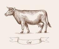 母牛 在葡萄酒板刻样式的传染媒介例证 能使用当难看的东西标签或贴纸图象 免版税库存照片