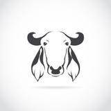 母牛头的传染媒介图象 库存图片