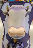 母牛` s头在迪拜机场 免版税库存照片