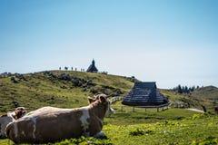 母牛enjoyng绿草和hutts看法在velika planina 库存图片