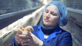 母禽畜安置专家画象 股票视频