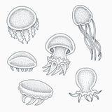 水母纹身花刺设计 免版税库存照片