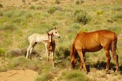 母马和两匹马驹 库存照片
