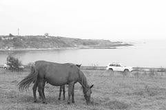 母马和驹海滨牧场地 免版税库存图片