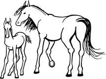 母马和驹 向量例证