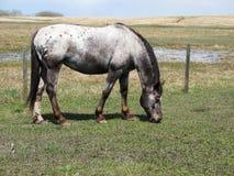 母马牧场地 库存图片