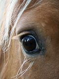 母马的深刻的神色,法国 免版税图库摄影