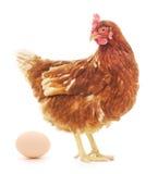 母鸡和鸡蛋 免版税库存照片