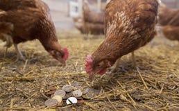 母鸡啄硬币 免版税库存图片